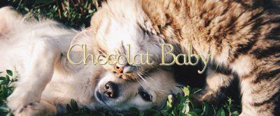 Beneficios de las mascotas en niños